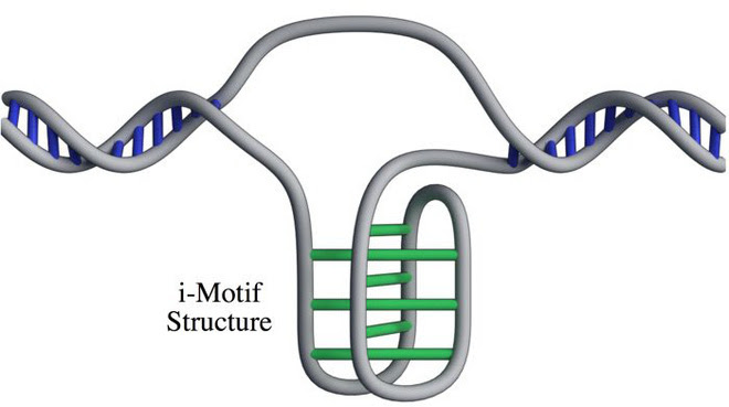 Phát hiện cấu trúc DNA hoàn toàn mới trên người, không xoắn kép và không tuân theo nguyên tắc bổ sung A-T G-C